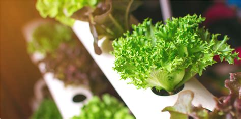 soilless vegetable growing methods louis bonduelle
