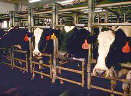 veganlove - Cattle Feed A Major Source Of Ozone Pollution