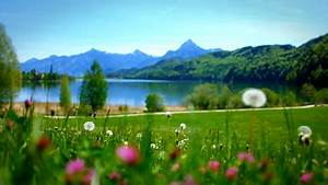 Relaxing Flowers & Meadows - Ambient Nature Wellness Yoga ...