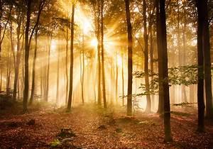 Fototapete Wald Am Morgen Tapete XXL Wandbild