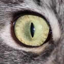 cat s eye 1500 px cat eye by hoschie stock on deviantart