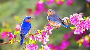 Résultat d'images pour fleurs de printemps sauvages