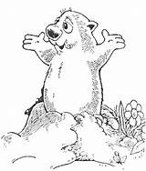Groundhog Coloring Pages Preschool Happy Sheets Ground February Printable Activities Holidays Hole Colouring Fun Phil Drawing Anycoloring Classroom Getdrawings Getcolorings sketch template