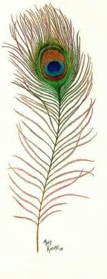 print number line peacock feather drawing by rogers
