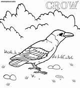 Crow Coloring Pages Line Drawing Print Printable Colorings Sketch Animal Getdrawings Template sketch template