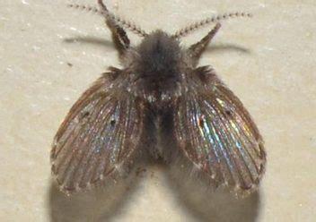 bathroom flies     moths colonial