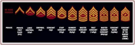 tree planted  water    rank  insignia
