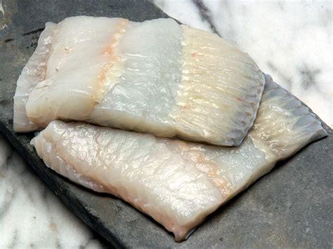buy wild turbot fillet  fine british fish
