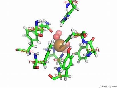 Copper Polysaccharide Pdb Neurospora Lytic Monooxygenase Crassa