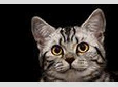 Katzen Fotos & Bilder auf fotocommunity