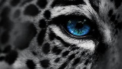 Animals Wild Wallpapers Leopard Animal Snow Desktop