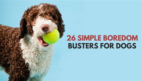 quick simple ways  relieve dog boredom puppy leaks