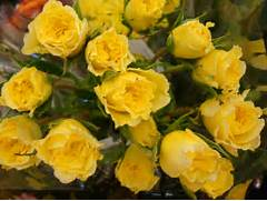 Beautiful Yellow Roses Bouquet Images   Pictures - Becuo  Beautiful Pictures Of Yellow Roses