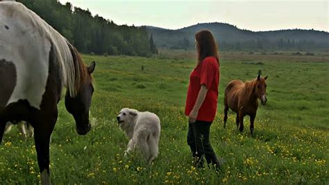 scared foal meets horses until she dog