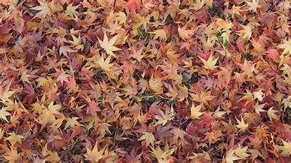 Ground Leaves Fall Maple Nature Wallpapers Mobile