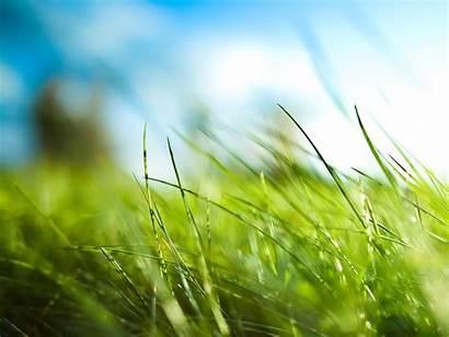Grass Outside Nature Wallpapers Plants Desktop