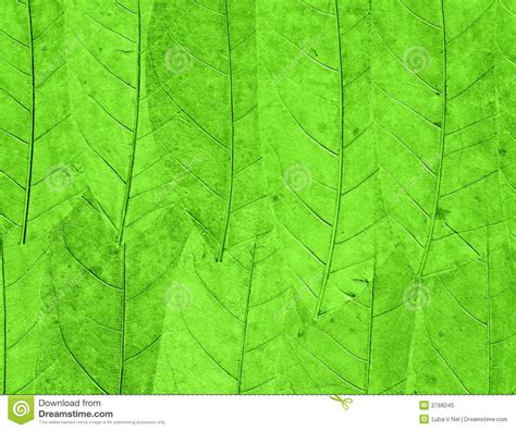 Green Powerpoint Background Stock Images Royalty Free Green Leaves Background Royalty Free Stock Photo Image