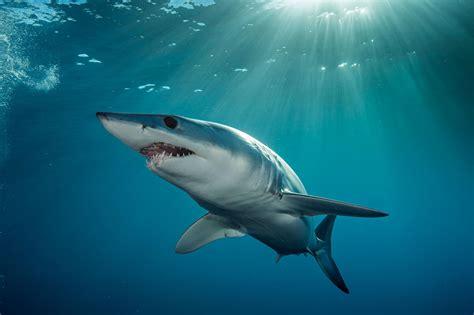 amazing sharks youve  heard