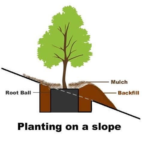how to plant a tree how to plant a tree on a slope or embankment