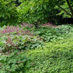 Bodendecker Blühend Winterhart Sonnig : kn terich pflanzen pflege und tipps mein sch ner garten ~ Frokenaadalensverden.com Haus und Dekorationen