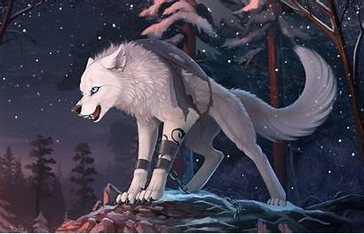 Furry Wolf Wallpapers Backgrounds Anime Background Animals