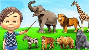 Animal Planet 2017 Wildlife Animals Beauty of Snake ...
