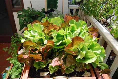 Choosing Containers For Container Gardening