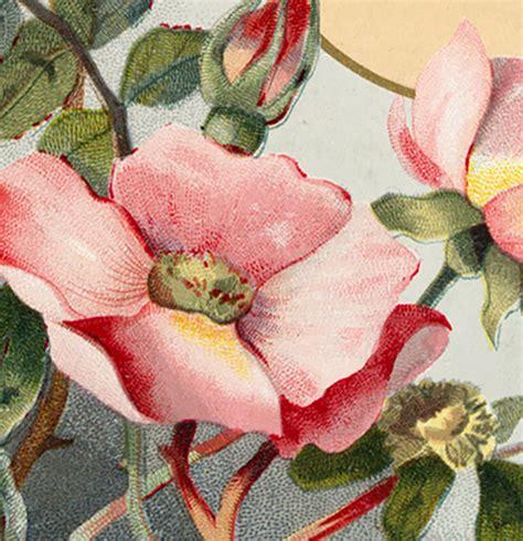 wild roses clip art  graphics fairy