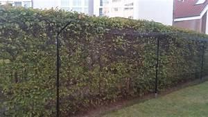 garten mit katzenzaun katzennetze nrw der katzennetz With katzennetz balkon mit dreispitz hut garde