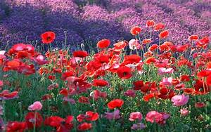 Best Colorful & Cute Flowers In The World Download Free In ...