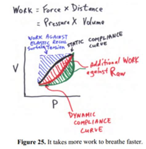 ventilation  gas exchange flashcards quizlet