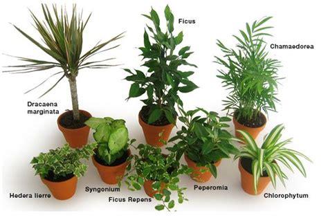 quelle plante pour une chambre maison les plantes dépolluantes vous connaissez