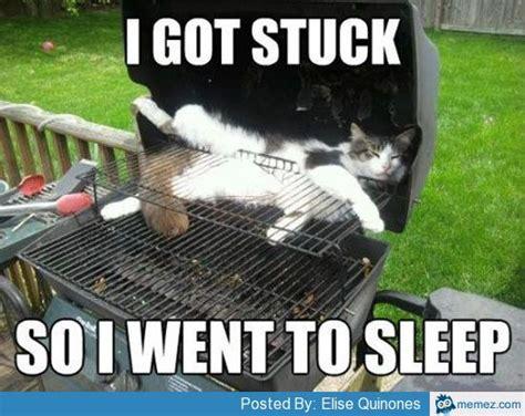 Funny Bbq Meme - cat sleeping in bbq grill memes com