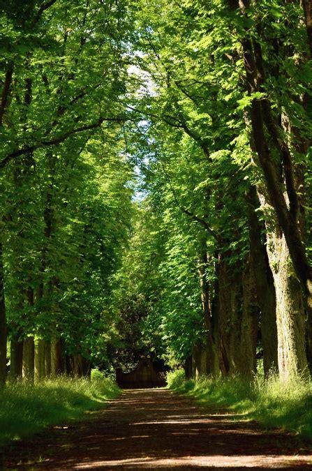 image libre route foret bois foret nature