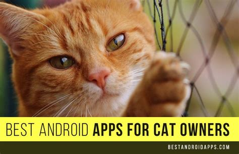 best for cat owners best android apps for cat owners best android apps