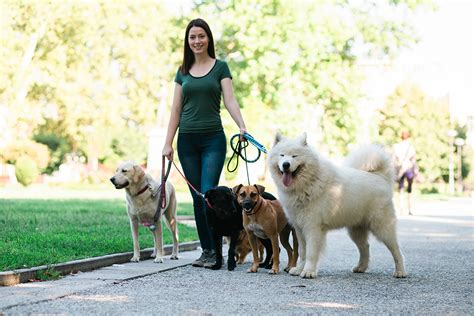 Compare all pet insurance companies. 10 Top Dog Walking Tips For Everyone - British Pet Insurance