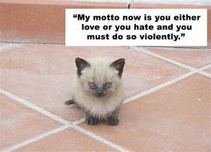 Cute Love Animal Quotes