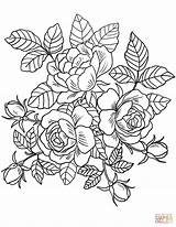 Coloring Flowers Pages Roses Printable Paper Drawing sketch template