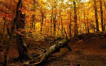 Forest Autumn Desktop Pixelstalk