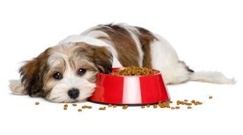 wie viel futter darf ein welpe hund  tag essen