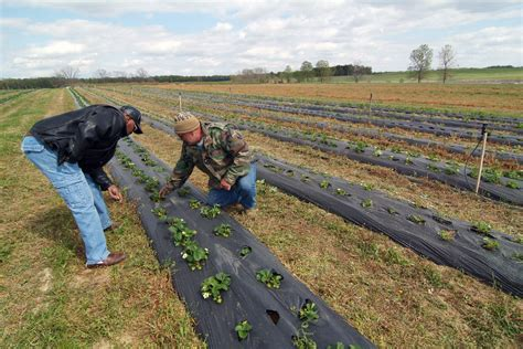 Hope Helps Usda Farmers Lawsuit Claimants Make The Most Of
