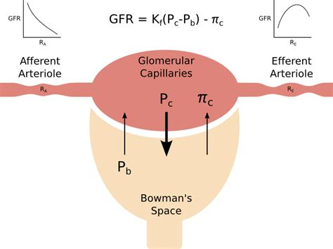 Glomerular Filtration Rate. Freemason Signs Of Stroke. Choir Signs. Tongue Infection Signs. Racing Pigeon Signs Of Stroke. Fake Signs Of Stroke. Thinking Signs Of Stroke. Mole Signs. Hat Signs Of Stroke
