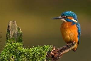 Grün Und Blau : gr n rot und blau foto bild tiere wildlife wild lebende v gel bilder auf fotocommunity ~ Markanthonyermac.com Haus und Dekorationen