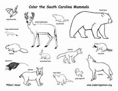 Mammals Coloring State Carolina North South Amphibians