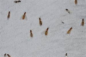 34 Small Bugs In Kitchen Sink Tiny Black Bugs In Kitchen