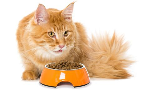 Was Braucht Man Alles Für Eine Katze