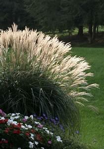 25+ best ideas about Pampas grass on Pinterest