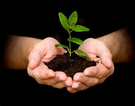 planting a tree 14 benefits of planting tree