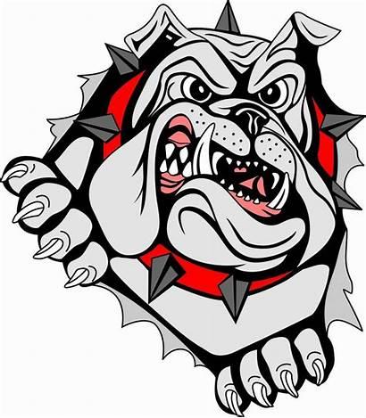 Bulldog Bulldogs Georgia Clipart Vector Dog Bull