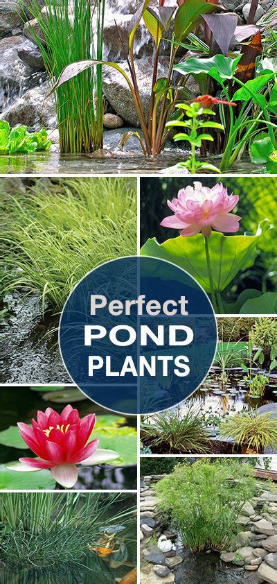 perfect pond plants  garden glove